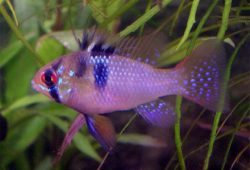 Tropical Fish Breeding