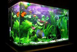 Tropical Fish Index