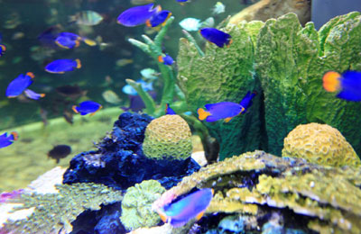 Tropical fish species: how to pick what's right for you