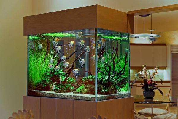 Unique Aquarium Decorations
