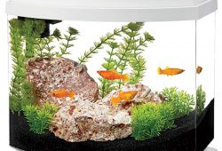 Three Faces of Unique Desktop Aquariums
