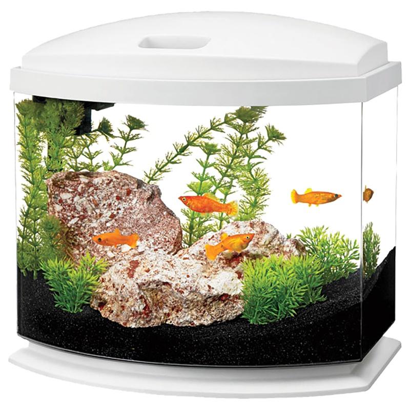 Three Faces of Unique Desktop Aquariums