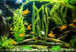 Why you need fish tank decorations!