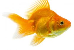Don't Bother Caring For Gold Fish In Lake Quemado
