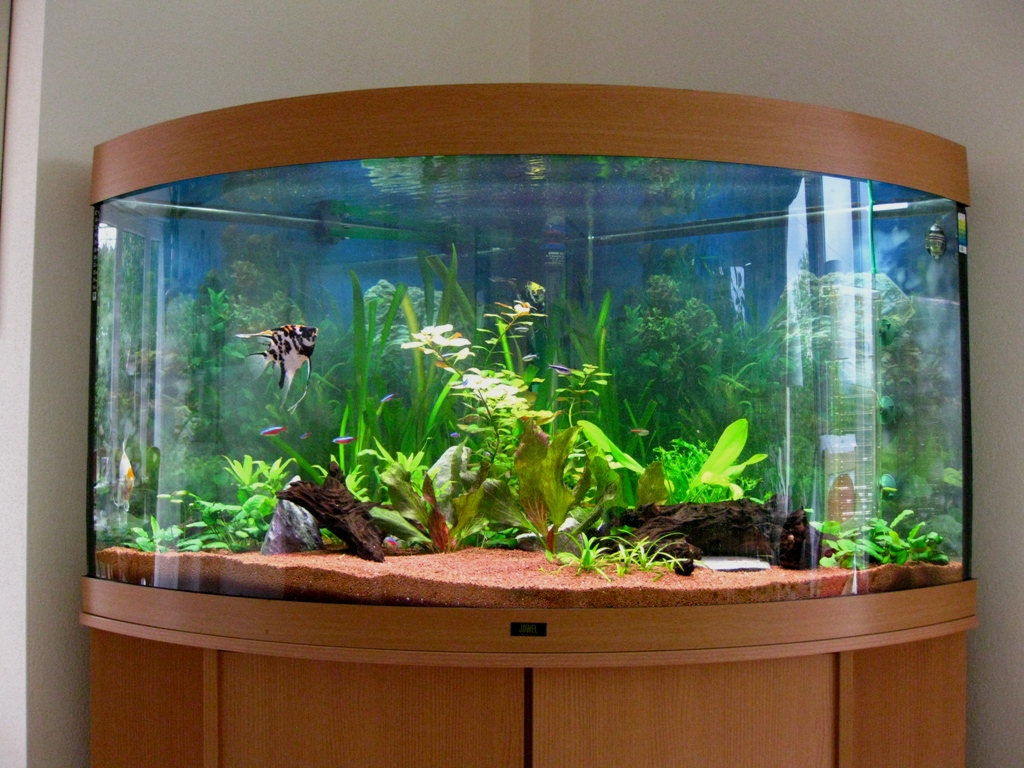 How to Make the Most of Your Aquarium Water