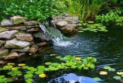 Variety of landscape pond designs