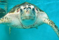 Top 5 Ways to Care for a Turtle