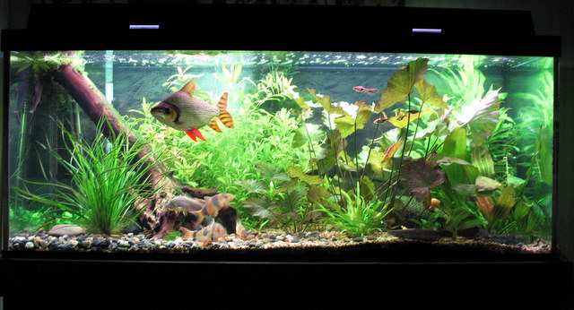 75 Gallon Fish Tank for Home or Office