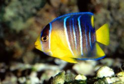 Read Through This Before You Buy Angel Fish