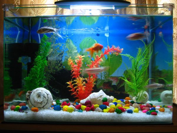 Undercover survey reveals aquarium retailer filter cycling for Cycling a fish tank