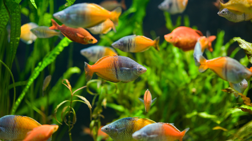 Aquarium Care Guide for Beginners