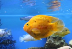Aquarium Fish User Reviews