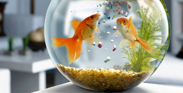 Aquarium Fish Food for Home or Workplace