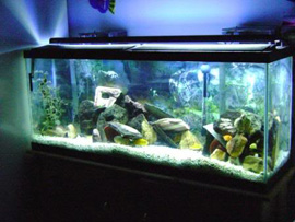 Cheap Aquarium Lighting