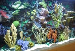 Aquarium Live Coral