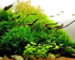 Aquarium plant basics