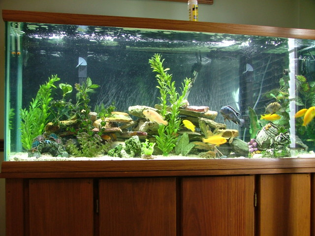 Building Your Own Aquarium