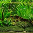 Growing Live Aquarium Plants