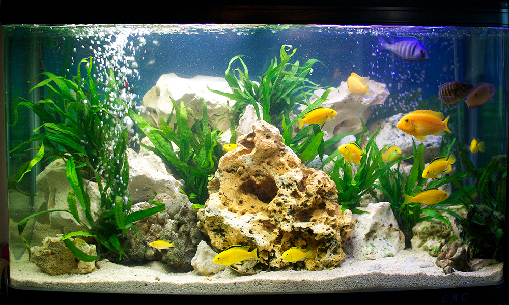How to Keep Fish Aquariums Algae Free