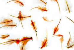 Live Fish Food Brine Shrimp Top Reviews