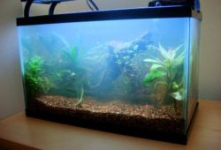 What Causes Cloudy Water In My Aquarium?