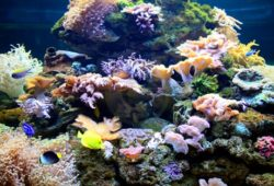 Nutrition for Marine Life in the Coral Aquarium