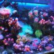 Coral Decor
