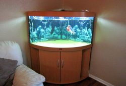 Corner Fish Tanks