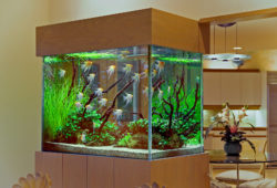 Custom Saltwater Aquarium & Custom Freshwater Aquarium