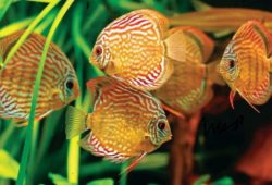 User Reviews on Discus Fish