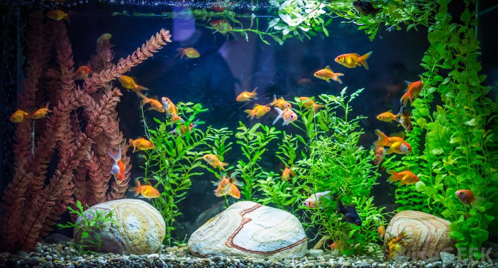 How Many Fish Can a Tank Hold and When to Add Them