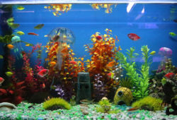 Fish Behavior And Personalities