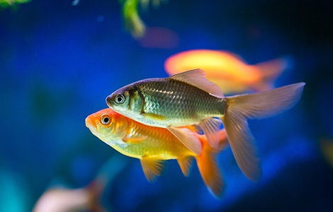How To Choose Fish For Your Aquarium
