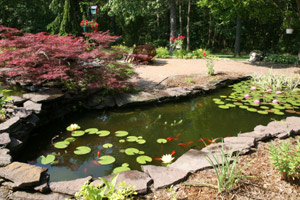 Fish Pond Maintenance for Fall