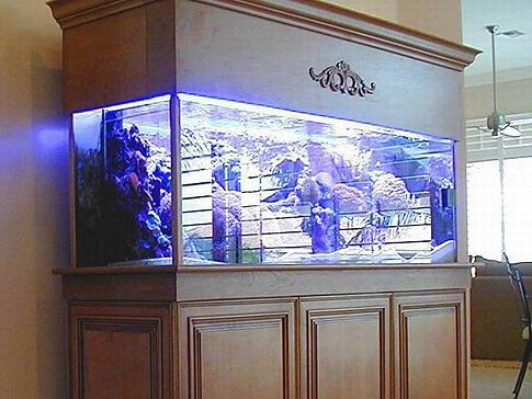 Fish Tank Canopy & Fish Tank Canopy. Some Interesting Considerations On Subject