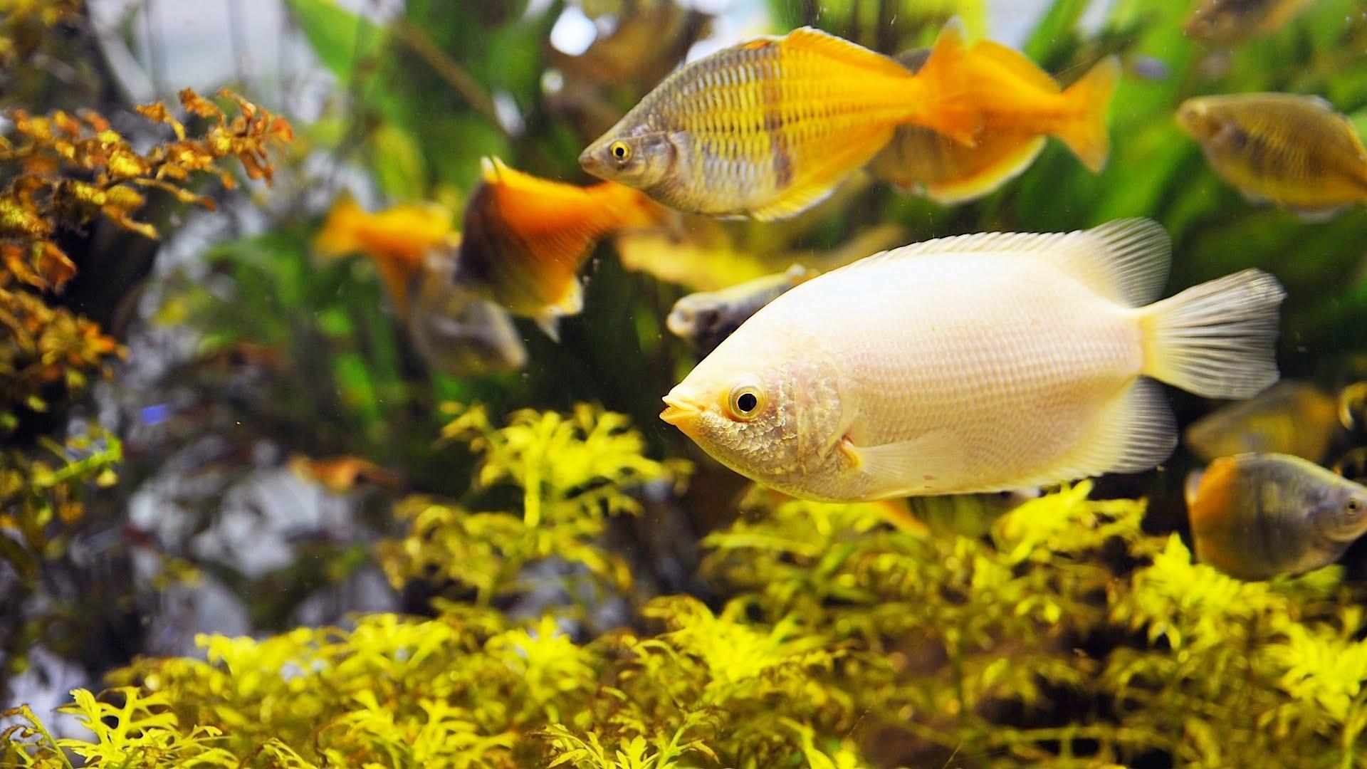 Fish Tank Care