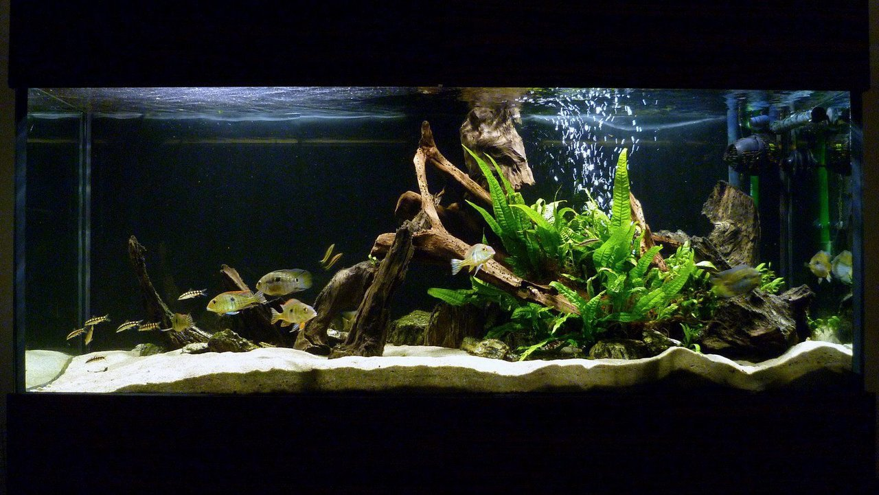 Are fish tank decorations really that necessary useful for Aquarium decoration ideas