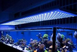 Tips on Choosing Fish Tank Lighting