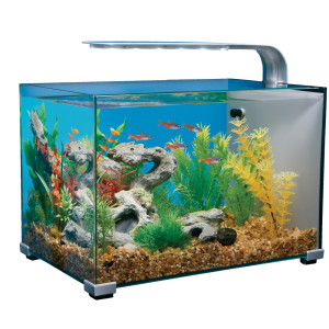 Tips on Finding Cheap Fish Tanks Online