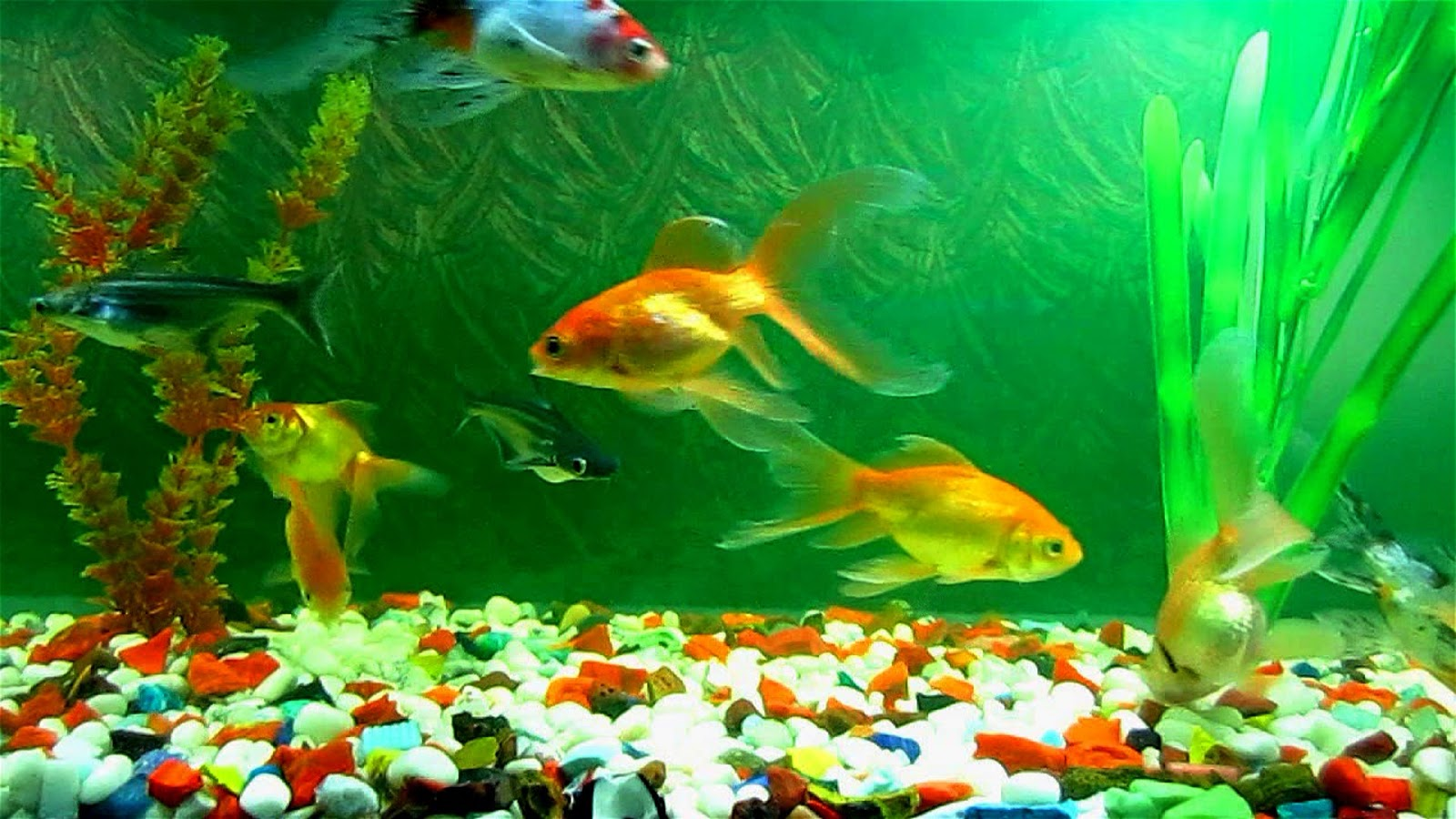 Keeping Your Fish Healthy