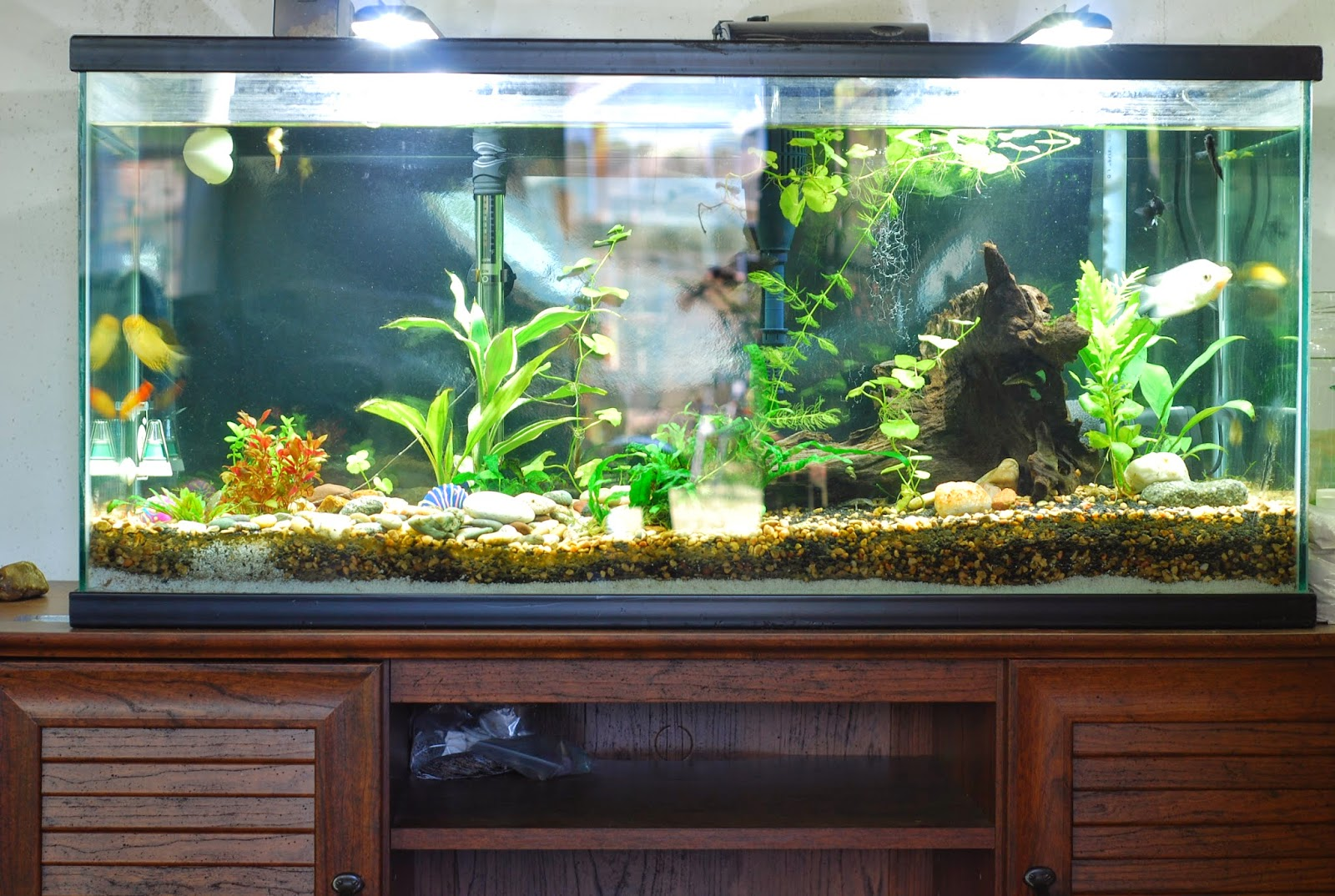 Selecting the Form of Your Aquarium