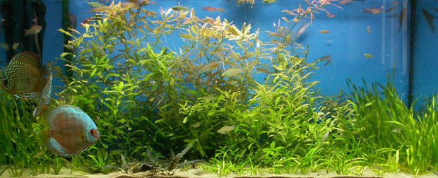 Getting Started with a Freshwater Aquarium