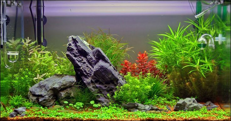 Fish Compatibility in the Freshwater Aquarium