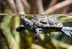 A Healthy Turtle Ckecklist