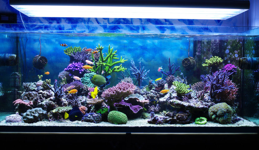 Upgrading to a Higher Capability Aquarium