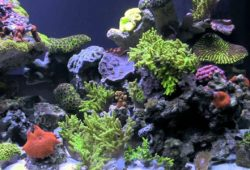 Invertebrates for Your Aquarium