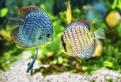 Keeping Your Aquarium Clean