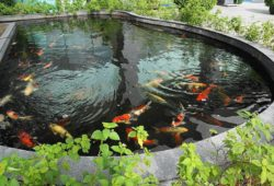 How do Fish Survive at the Bottom of a Pond?