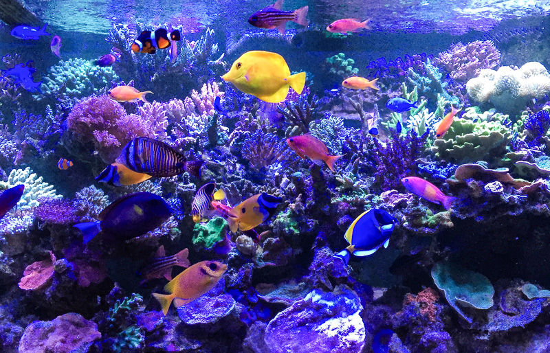 Top 5 Marine Aquarium Fish