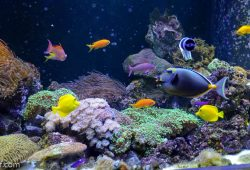 Marine Fish Tanks
